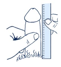 The Correct Way To Measure a Penis